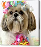 Shih Tzu Dog Canvas Print