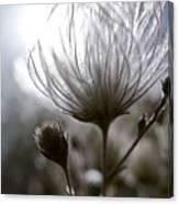 Shimmering Flower I Canvas Print