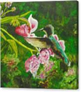 Shimmering Hummingbird  Canvas Print