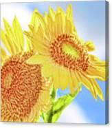 Shining Sunflowers Canvas Print