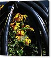 Shiny Black Tire Surrounding Black Eyed Surrounding Black Eyed Susans Bluish Background 2 932017 Canvas Print