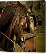 Shire Horse Canvas Print