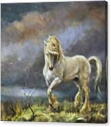 Shire Stallion Canvas Print