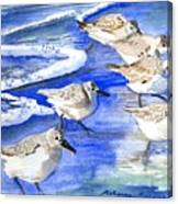 Shore Birds Canvas Print