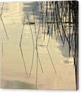 Shore Lines Canvas Print