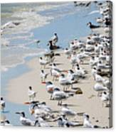 Shorebird Gathering Canvas Print