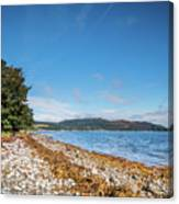 Shoreline On The Kyles Of Bute Canvas Print