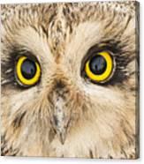 Short-eared Owl Face Canvas Print