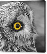 Short-eared Owl Mono Coloured Eye Canvas Print
