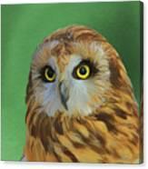 Short Eared Owl On Green Canvas Print