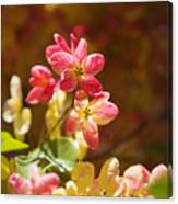 Shower Tree Blossoms Canvas Print