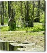 Shreks Swamp Canvas Print