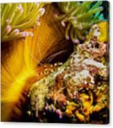 Shrimp Vogue Canvas Print