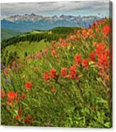 Shrine Pass Wildflowers Canvas Print