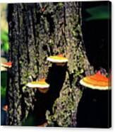 Shroomtree Canvas Print