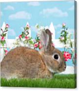Shy Brown Dwarf Bunny Portrait Canvas Print