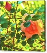 Sketchy Rose Canvas Print
