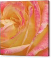 Shy Yellow Rose Canvas Print