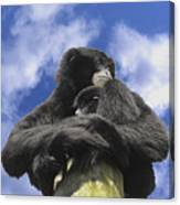 Siamang Gibbon Canvas Print
