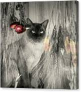 Siamese Cat In Black And White Canvas Print