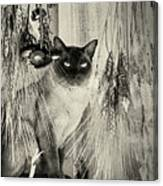 Siamese Cat Posing In Black And White Canvas Print