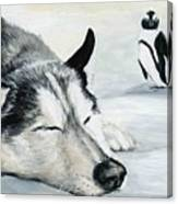 Siberian Huskey Canvas Print