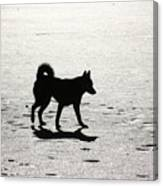 Siberian Husky 6 Canvas Print