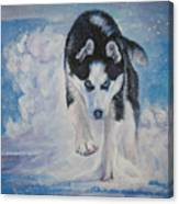 Siberian Husky Run Canvas Print
