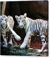 Siberian Tiger Cubs Canvas Print
