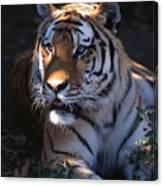 Siberian Tiger Executive Portrait Canvas Print