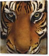 Siberian Tiger I Canvas Print