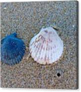 Side By Side Shells Canvas Print