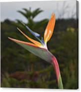 Side View Of A Beautiful Bird Of Paradise Flower  Canvas Print