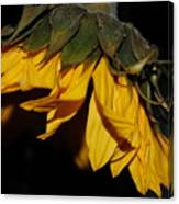 Sideview Sunflower Canvas Print