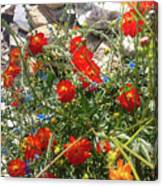 Sidewalk Flowers Canvas Print