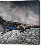 Sierra Fence Lizard 2 - Sierra Canvas Print