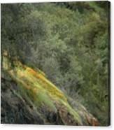 Sierra Poppies Canvas Print