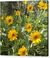 Sierra Wildflowers Canvas Print