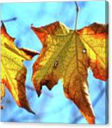 Signs Of Fall Canvas Print