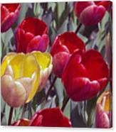 Signs Of Sping  Canvas Print