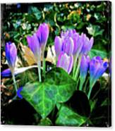 Signs Of Spring I Canvas Print