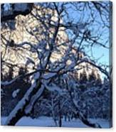 Silence In The Trees Yosemite Canvas Print