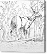 Silent Forrest Canvas Print