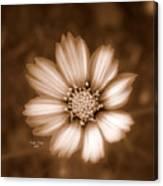 Silent Petals Canvas Print