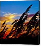 Silhouette  Oats Canvas Print