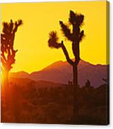 Silhouette Of Joshua Trees Yucca Canvas Print