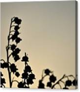 Silhouette Of Lilies Of The Valley 2 Canvas Print