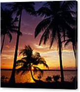 Silhouette Of Palm Tree On The Coast Canvas Print