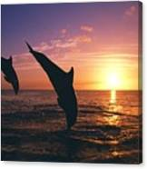 Silhouette Of Two Bottlenose Dolphins Canvas Print