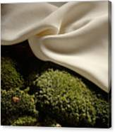Silk And Moss Canvas Print